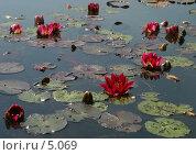 Купить «Прудик с водяными лилиями», фото № 5069, снято 1 июля 2006 г. (c) Tamara Kulikova / Фотобанк Лори