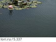 Купить «Прудик с водяными лилиями, вода с рябью», фото № 5337, снято 1 июля 2006 г. (c) Tamara Kulikova / Фотобанк Лори