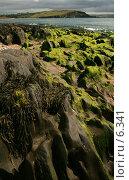 Купить «Водоросли и ракушки на берегу - отлив», фото № 6341, снято 7 августа 2006 г. (c) Tamara Kulikova / Фотобанк Лори