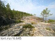 Купить «Лес на камнях», фото № 6645, снято 8 июля 2006 г. (c) Николай Гернет / Фотобанк Лори