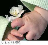 Купить «Цветок яблони в детской ручке», фото № 7001, снято 23 сентября 2018 г. (c) Юлия Кузнецова / Фотобанк Лори