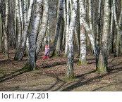 Купить «Ребенок гуляет по березовому лесу», фото № 7201, снято 18 августа 2018 г. (c) SummeRain / Фотобанк Лори