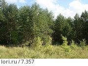 Купить «Лес», фото № 7357, снято 20 августа 2018 г. (c) Т.Кожевникова / Фотобанк Лори
