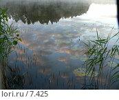 Купить «Зеркало», фото № 7425, снято 27 июля 2006 г. (c) Ivan / Фотобанк Лори