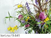 Купить «Букет из лесных и полевых цветов и трав на белом фоне», фото № 9641, снято 24 июля 2006 г. (c) Ольга Красавина / Фотобанк Лори