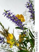 Купить «Лесные и полевые цветы и травы на белом», фото № 9645, снято 24 июля 2006 г. (c) Ольга Красавина / Фотобанк Лори