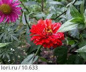 Купить «Цветок тянется за последней каплей дождя, повисшей на листочке», фото № 10633, снято 23 августа 2006 г. (c) Рыжов Андрей / Фотобанк Лори