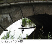 Купить «Царское село, каменный мостик», фото № 10749, снято 21 августа 2005 г. (c) Комиссарова Ольга / Фотобанк Лори