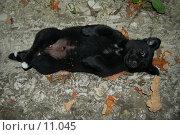Тузик отдыхает. Стоковое фото, фотограф Типикин Дмитрий / Фотобанк Лори