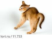 Внезапный испуг. Стоковое фото, фотограф Vladimir Suponev / Фотобанк Лори