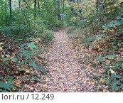 Купить «Осенний пейзаж», фото № 12249, снято 28 сентября 2006 г. (c) Roki / Фотобанк Лори