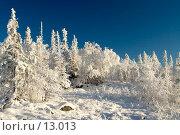 Купить «Зимний пейзаж, деревья под снегом после снежного бурана», фото № 13013, снято 5 ноября 2006 г. (c) Ольга Красавина / Фотобанк Лори
