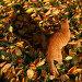 Рыжий кот, осень, фото № 13057, снято 18 ноября 2006 г. (c) Tamara Kulikova / Фотобанк Лори