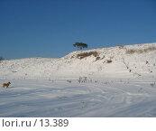 Купить «Зимний пейзаж», фото № 13389, снято 5 февраля 2005 г. (c) Olga Golubtsova / Фотобанк Лори