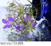 Купить «Герань лесная и травы в каплях воды», фото № 13965, снято 1 июля 2006 г. (c) Ольга Красавина / Фотобанк Лори