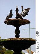 Купить «Голуби в чаше фонтана», фото № 14649, снято 18 июня 2006 г. (c) Старкова Ольга / Фотобанк Лори