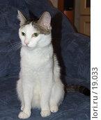 Купить «Кот с серыми пятнами», фото № 19033, снято 6 января 2007 г. (c) Нурулин Андрей / Фотобанк Лори