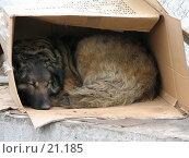 Купить «Бездомный пес», фото № 21185, снято 2 апреля 2006 г. (c) Fro / Фотобанк Лори