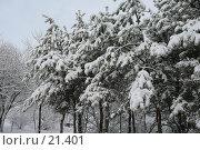 Купить «Зима в лесу», фото № 21401, снято 31 января 2007 г. (c) Давыдова Нина / Фотобанк Лори