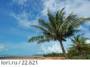 Купить «Кокосовые пальмы на обрыве. Северное побережье Австралии», фото № 22621, снято 6 апреля 2007 г. (c) Eleanor Wilks / Фотобанк Лори