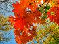 Осенние краски, фото № 22949, снято 28 октября 2016 г. (c) DIA / Фотобанк Лори