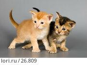 Купить «Котята впервые в студии», фото № 26809, снято 10 марта 2007 г. (c) Vladimir Suponev / Фотобанк Лори