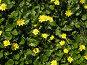 Цветы желтые, фото № 29205, снято 1 апреля 2007 г. (c) Светлана / Фотобанк Лори
