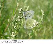 Купить «Инстинкт размножения», фото № 29257, снято 16 июля 2006 г. (c) Сергей Ксейдор / Фотобанк Лори