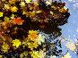 Листья... лужа... осень, фото № 29433, снято 28 октября 2016 г. (c) DIA / Фотобанк Лори