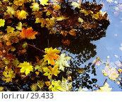Листья... лужа... осень. Стоковое фото, фотограф DIA / Фотобанк Лори