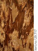 Купить «Кора молодого эвкалипта», фото № 29717, снято 15 апреля 2007 г. (c) Eleanor Wilks / Фотобанк Лори