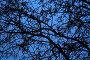 Переплетение веток дерева на синем вечернем небе, фото № 29969, снято 23 марта 2007 г. (c) Demyanyuk Kateryna / Фотобанк Лори