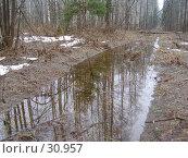 Купить «Отражение деревьев в луже», фото № 30957, снято 22 апреля 2006 г. (c) Сергей Ксейдор / Фотобанк Лори