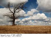 Купить «Одинокое дерево на фоне апрельских облаков», фото № 31657, снято 10 апреля 2007 г. (c) Павел Преснов / Фотобанк Лори