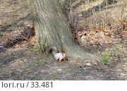 Купить «Белка возле дерева», фото № 33481, снято 19 марта 2019 г. (c) SummeRain / Фотобанк Лори