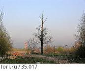 Купить «Голое дерево», фото № 35017, снято 3 мая 2005 г. (c) Андрей Яшин / Фотобанк Лори