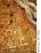 Купить «Окаменевшая цветная глина и прожилки белого кварца», фото № 37153, снято 24 мая 2007 г. (c) Eleanor Wilks / Фотобанк Лори