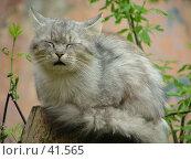 Купить «Кошка», фото № 41565, снято 12 июня 2004 г. (c) Александр Демшин / Фотобанк Лори