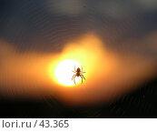 Купить «Паук на фоне солнца», фото № 43365, снято 21 июня 2006 г. (c) Рамиль / Фотобанк Лори