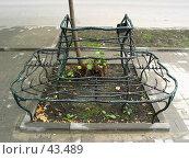 Таганрог: скамейка (2003 год). Стоковое фото, фотограф Тихонов Алексей Владимирович / Фотобанк Лори