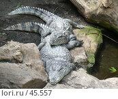 Купить «Барселонский зоопарк», эксклюзивное фото № 45557, снято 21 сентября 2006 г. (c) Журавлев Андрей / Фотобанк Лори
