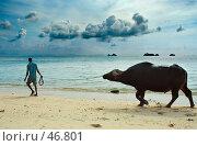 Буйвол (2006 год). Стоковое фото, фотограф Знаменский Олег / Фотобанк Лори
