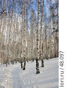 Зимний березняк, фото № 48097, снято 3 марта 2007 г. (c) Ivan I. Karpovich / Фотобанк Лори