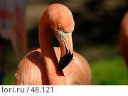 Купить «Розовый фламинго», фото № 48121, снято 20 мая 2007 г. (c) Андрей Лабутин / Фотобанк Лори