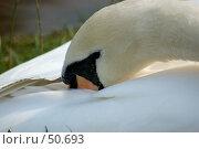 Купить «Лебедь», фото № 50693, снято 19 сентября 2006 г. (c) Юрий Соколов / Фотобанк Лори