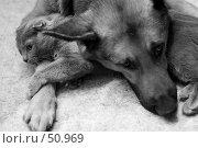 Купить «Кошка с собакой», фото № 50969, снято 16 декабря 2005 г. (c) Лисовская Наталья / Фотобанк Лори
