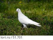 Купить «Белый голубь», фото № 51701, снято 20 мая 2007 г. (c) Андрей Лабутин / Фотобанк Лори