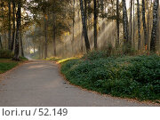 Утро в лесу. Стоковое фото, фотограф Борис Никитин / Фотобанк Лори