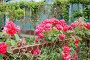 Розы на заборе, фото № 52665, снято 27 июня 2017 г. (c) SummeRain / Фотобанк Лори