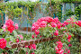Розы на заборе, фото № 52665, снято 24 мая 2017 г. (c) SummeRain / Фотобанк Лори